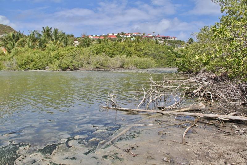 CATASTROPHE À GRAND CUL DE SAC : l'étang se meurt!