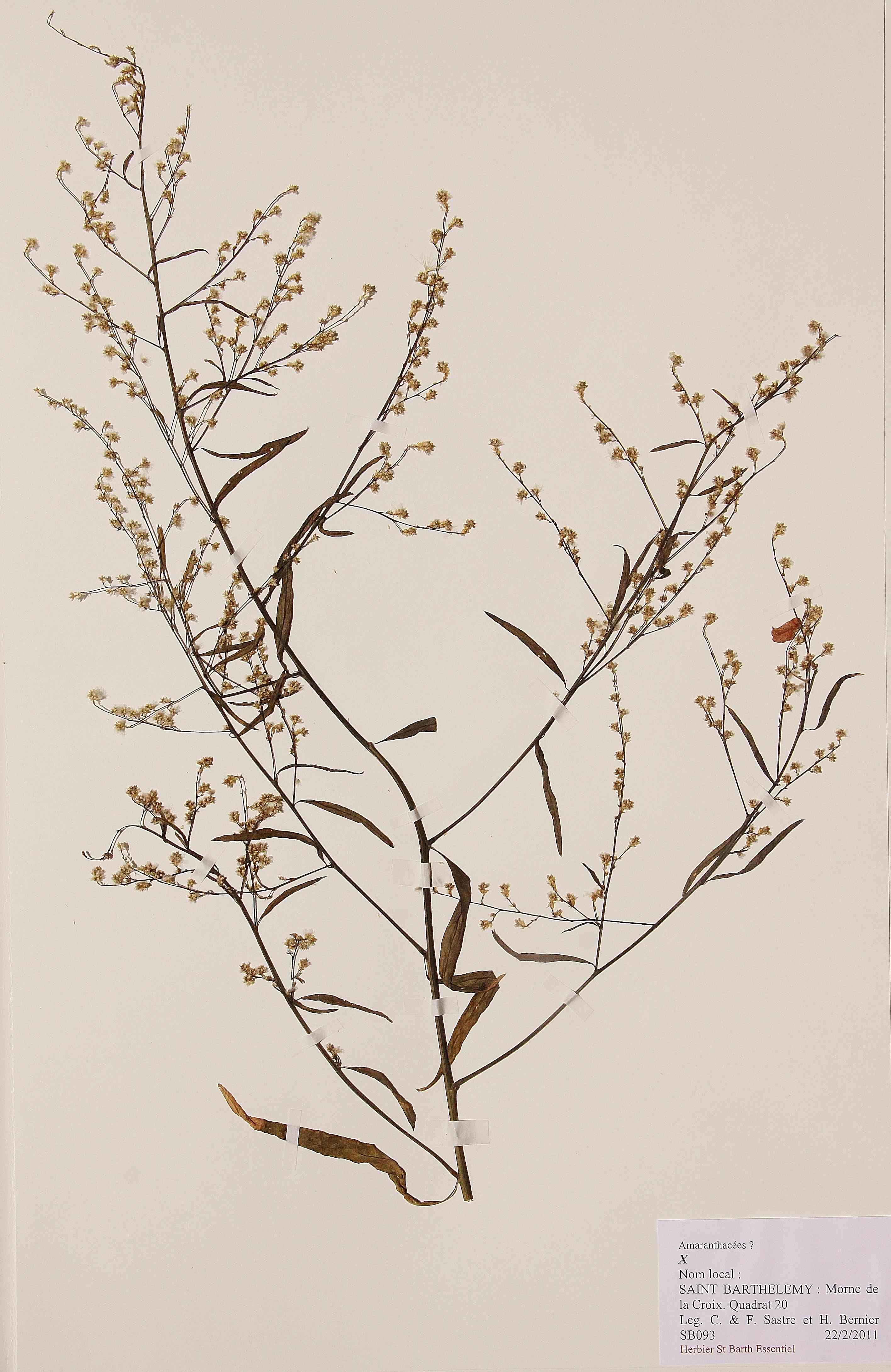 THE HERBARIUM : a tool dedicated to the preservation of our biodiversity